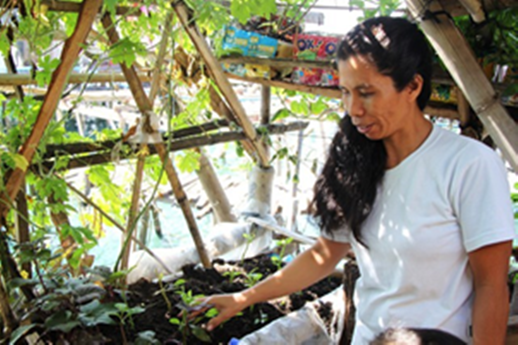 Helen Camacho tends to her seedlings which she grows through Urban Container Gardening.  She attests that with her produce, she is able to put food on the table.