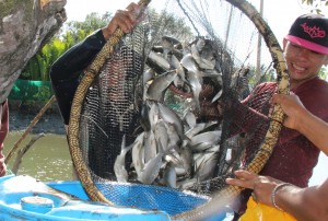 Pantawid Pamilya beneficiaries celebrate their bountiful harvest of milkfish from their Bangus Production project